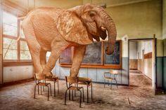 وعلى سبيل التعلم يستجدينا أطفالنا: نحتاج مناهجا على قدر عقولنا Spoke Art, Elephant, Animals, Animaux, Animales, Elephants, Animal, Dieren
