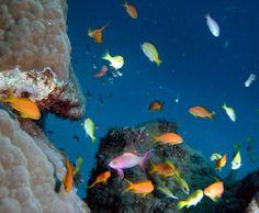 As cores do fundo do mar