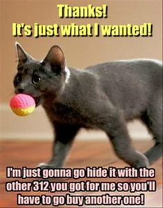 This is our tom cat to a tee! Hurley has some huge stash somewhere in the house of all his lovely treasures.