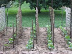 Rainfall and snow in your backyard landscaping – Greenhouse Design Ideas Fruit Garden, Vegetable Garden, Diy Vegetable Storage, Farm Gardens, Garden Farm, Garden Trellis, Winter Garden, Garden Planning, Backyard Landscaping