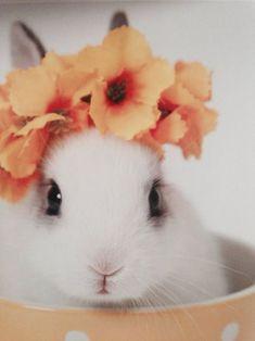 Adorable bunnies!!