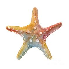 Starfish by Amy Kirkpatrick - Starfish Painting - Starfish Fine Art Prints and Posters for Sale