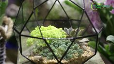 geometric  terrariums Glass Terrarium, Terrariums, Planter Ideas, Planters, Plant Holders, Air Plants, Flower Pots, Succulents, Gardens