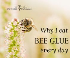 The benefits of eating bee glue (propolis) every day Available online from www. Propolis Benefits, Bee Propolis, Raising Bees, I Love Bees, Bee Pollen, Holistic Medicine, Forever Living Products, Save The Bees, Bees Knees