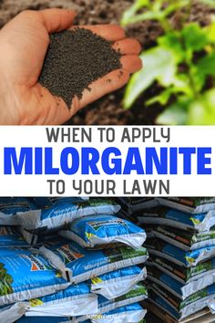 Garden Diy Organic lawn has a lot more micro organic activities visible which proves that the lawn is healthy. One of the best lawn ferlizers is Milorganite. And the question is that when to apply milorganite to lawn? Lawn Care Schedule, Lawn Care Tips, Organic Gardening, Gardening Tips, Indoor Gardening, Organic Lawn Fertilizer, Bermuda Grass, Weeds In Lawn, Gardens