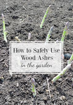 How To Safely Use Wood Ashes In The Garden Tips And Precautions