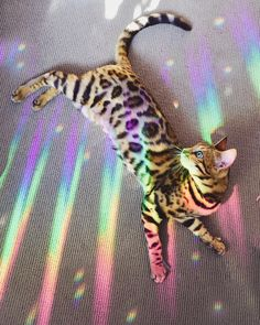This cutie bathed in rainbow light. - your daily dose of funny cats - cute kittens - pet memes - pets in clothes - kitty breeds - sweet animal pictures - perfect photos for cat moms Cute Baby Animals, Animals And Pets, Funny Animals, Animals Images, Funniest Animals, Farm Animals, Cute Kittens, Cats And Kittens, I Love Cats