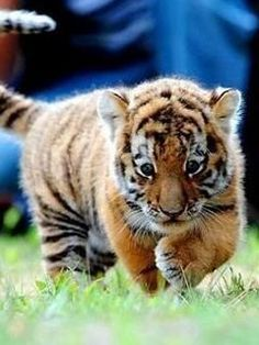 My favorite animal in the world :)