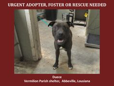 ***SUPER URGENT!!!*** - PLEASE SAVE DEUCE!! - EU DATE: 8/11/2014 -- duece  Breed: Pit Bull Terrier (mix breed) Age: Young adult Gender: Male  --  please contact us at animalaidvermilion@gmail.com or (337) 366-0212 or visit our website animalaidvermilionarea.com for more information
