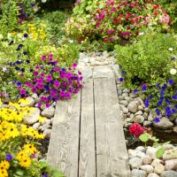 Many resources are available that can help you to grow a lovely garden. The Internet is one, and you could easily lose track of time as you peruse sites searching for what you need. Luckily, you will find all the great tips you need t