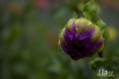 violet by eross on YouPic Canon Eos 1100d, Nature, Plants, Naturaleza, Plant, Nature Illustration, Off Grid, Planets, Natural