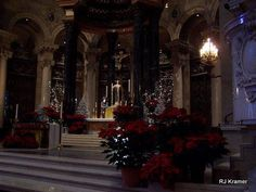 Poinsettias at the Saint Paul Cathedral!