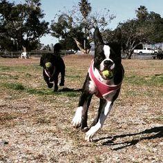 Rosie is enjoying this Super Sized Sunday Funday! #zendogrosie #dogzenergy #dogs #dogsofinstagram #puppies #dogfriendly #dog #cute #animals #pets #adorable #friend #fun #dogogram #instapuppy #puppiesofinstagram #lajolla #winter