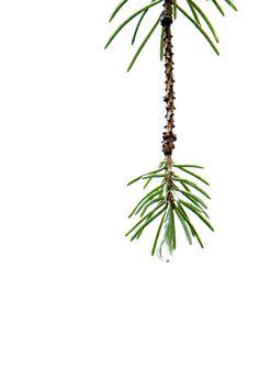 spruce (mary jo hoffman)