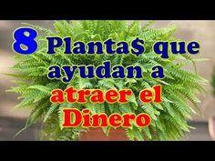LA NASA RECOMIENDA TENER ESTAS PLANTAS EN TU CASA PARA PURIFICAR EL AIRE Y OTRAS COSAS INCREÍBLES! - YouTube