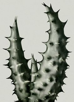 Peter Lippman Cacti