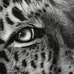 Scratchboard Art Animals - Bing Images