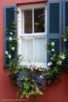 beautiful flowers of historic Charleston, SC