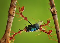 Teamwork...Photos by Uda Dennie