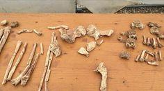Sensationsfund in Baugrube: Bis zu 1000 Skelette in Pasing entdeckt