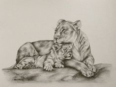 "lioness line drawing | Lioness and cub drawing: 12x9"" Finishes in an hour!"