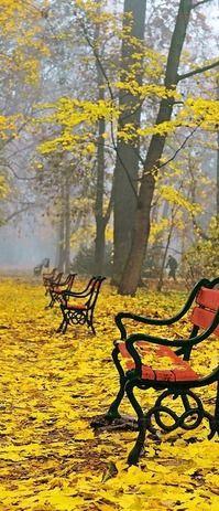 Outono amarelo, Polônia