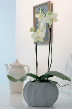 Empieza la cuenta atrás para el curso de Orquídeas. Aprovéchese, es gratis y de regalo una Mocadorá. ¡¡¡No se lo pierda!!! Mocadorá: https://www.jardineriakuka.com/blog/eventos/la-mocadora.html Orquídea: https://www.jardineriakuka.com/…/plantas…/las-orquideas.html #orquidea #phalaenopsis #curso #mocadora #santdonis #plantas #orquideasazules #orquideasraras #orquideasoriginales