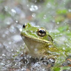 Photo Frog in the rain by Isaac  S on 500px