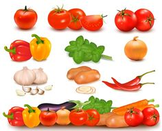Beautifully vegetables vector graphics