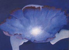 Nephaster Cyaneus (Cloudstar)