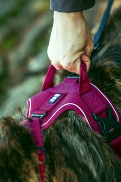 Pechera para Perros Activos en Cereza - Active Harness de Hurtta® – La Tienda de Frida & Chelsee