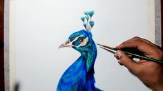 Drawing a peacock - step by step tutorial - Prismacolor pencils.