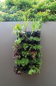 1000 images about outdoor living on pinterest for Vertical wall garden kits