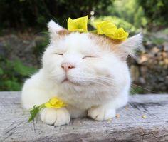 待宵草 | のせ猫オフィシャルブログ Powered by Ameba