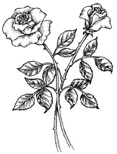 How to draw plants - The illustrations would be excellent for either coloring or embroidery.