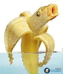 I'm a banana, I'm a banana, I'm a banana. Wait no, I'm a fish. I'm a banana fish. Animals Images, Funny Animals, Cute Animals, Bizarre Animals, Photoshopped Animals, Vegetable Animals, Animal Mashups, Funny Fruit, Funny Food