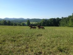 Running Start. Horses at Reber Rock Farm.