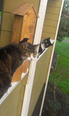 カラスが気になる猫