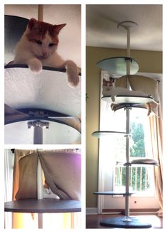 """Our homemade DIY cat tree! Nailed cheap beds to two of the platforms and put a """"curtain"""" around one because they like to be hidden. I'm going to wrap the center pole with sisal rope for scratching and cover the other platforms with carpet for better grip when jumping but for now they seem very happy with the result. :) it stands next to a $150 cat condo that's falling apart, I think well stick with this one. Made with: $30 Ikea STOLMEN pole (brackets included), Plywood for each level then…"""