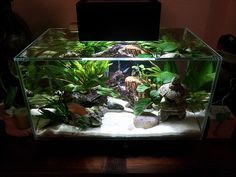 Nano fish tanks: Fluval Edge 23L. The world first 3D water cube.