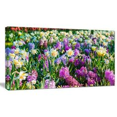 "DesignArt 'Spring Flowers in Keukenhof Park' Photographic Print on Wrapped Canvas Size: 28"" H x 60"" W x 1.5"" D"