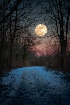 Wolf Moon Winter Path | by Jim Crotty
