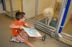 Pour habituer les chiens de refuges à la vie de famille, de jeunes enfants leur lisent des livres