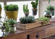 Plantas dentro de casa: Se você adora se cercar de verde, mas não tem área externa nem tempo para se dedicar à jardinagem, estas são as espécies ideais: dão pouco trabalho e vivem bem à sombra.