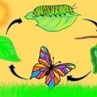 Hand illustrated digital clipart to depict the stages of the butterfly life cycle. 24 images in all including:  - eggs  - caterpillar  - chrysalis ...