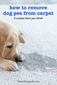 3 easy steps to remove dog urine odor from carpet - tested and approved by a foster dog mom. #dogs #dogheatlh #puppy #housecleaning #rescuedogs101 Urine Odor, Dog Urine, Rescue Puppies, Best Puppies, Dog Pee Smell, Puppy Potty Training Tips, Puppy Quotes, Dog Health Tips, Foster Dog