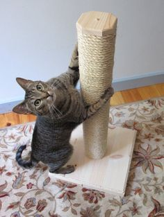 Cat Training Scratching 14 DIY Projects for Cat People (including toys, scratchers, cat tents and cubbies, and a bowl stand) - Keep your cat happy with these fun and easy DIY projects. Lit Chat Diy, Diy Jouet Pour Chat, Diy Cat Tent, Animal Projects, Diy Projects, Animal Gato, Cat Scratcher, Cat People, Cat Crafts