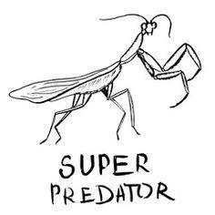 Mantis, hand drawn illustration, vector