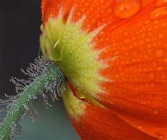 Mesmerizing close up captures of flowers by Illinois-based photographer Tom Dorsch. More macro photography via Flickr