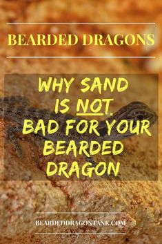 Sand Is Not Bad For Your Bearded Dragon! - Do you think that sand is a dangerous substrate for y Bearded Dragon Funny, Bearded Dragon Cage, Bearded Dragon Habitat, Bearded Dragon Substrate, Bearded Dragon Lighting, Bearded Dragon Enclosure, Dragon Facts, Bearded Dragon Terrarium, Terrariums